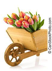 Wheelbarrow with tulips
