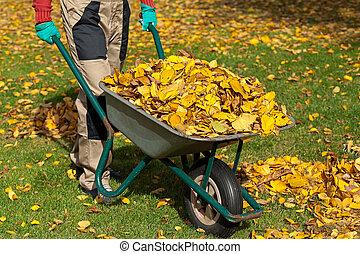 Wheelborow in garden - A man with a wheelborrow full of...