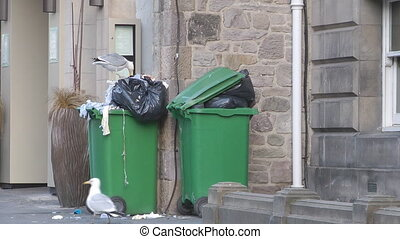Wheelie Garbage cans - Seagull Looking For Food Scraps In An...
