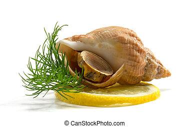 whelks, con, eneldo, y, limón, en, un, fondo blanco