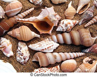 whelks, en, el, playa