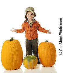 Which Pumpkin?