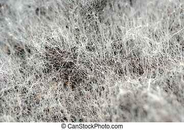 While Mold on Soil Macro - A macro shot of white mold on...
