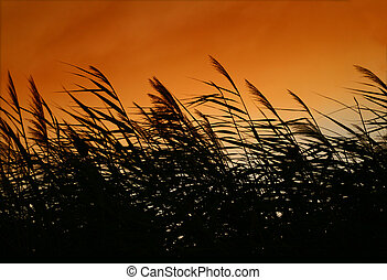 Whispering Reeds At Sunset Wind - There was a fire at Assos...