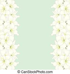 White Amaryllis Border - Hippeastrum. Christmas Flower....