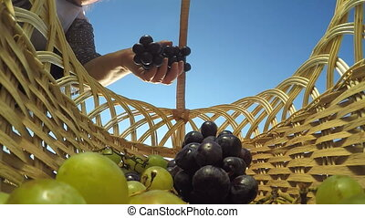 white and black grapes in basket