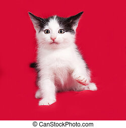 White and black kitten playing on red