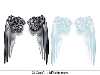 white and black wings
