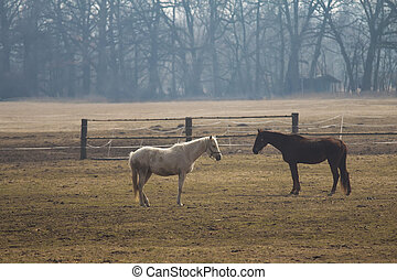 White and brown horse in pasture