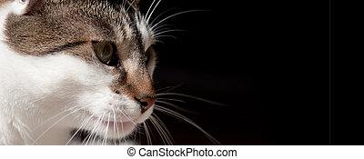 white and gray cat 2