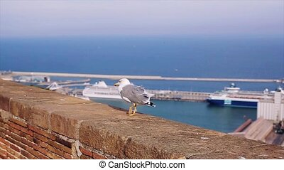 White and grey seagull walk on brick fence at cost of sea in Spain. Summer sunny day. Ships