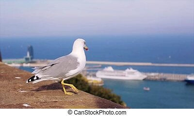 White and grey seagull walk on brick fence at cost of sea in Spain. Summer sunny day. Ships. Port