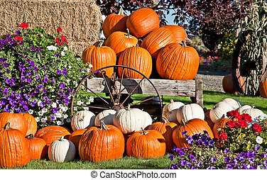 White and Orange Pumpkin Fall Still Life - This is white and...