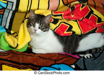 White and tabby cat lying on blanket