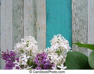 White and Violet Lilac on a Vintage Wooden Background View From Above