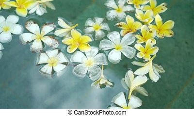White and yellow flowers in swimming pool at luxury villa