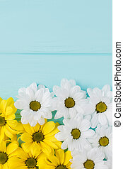 White and yellow golden-daisy flowers composition.