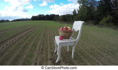 chair on farm field in autumn and full apple fruits wicker...
