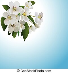 White apple flowers with leaves and bud