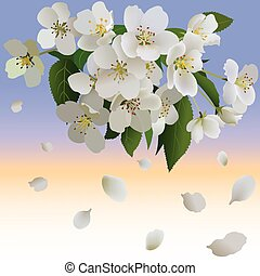 White apple flowers with leaves and bud. Branch of blossoming apple tree and petal