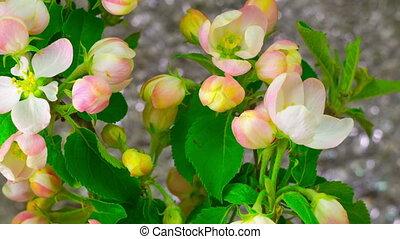 White Apple Tree Flowers.
