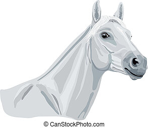 white arabian horse looking at you