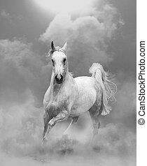 white arabian stallion running in dust in monocrhome tones