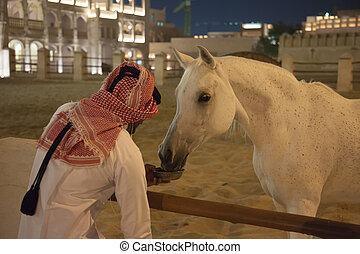 White Arabic thoroughbred horse in Doha, Qatar
