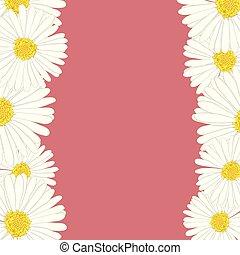 White Aster, Daisy Flower Border
