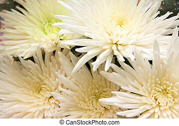 A few white asters in bouquet
