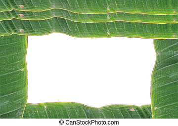 white background surrounded by green banana leaves with text space