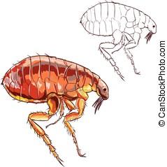 white background vector illustration of a flea