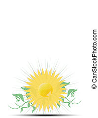 white background with sunflower