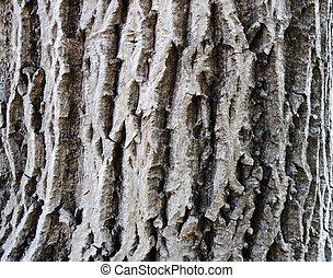 White bark texture