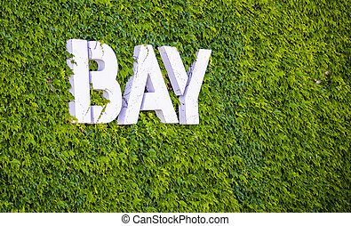 White bay word on green vine wall
