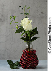 white beautiful rose flower on gray background