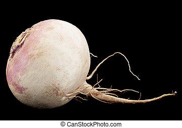 White big radish