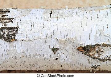 birch bark - white birch bark closeup photo, horizontal...