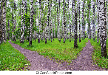 White birch trees in the forest in summer, green grass