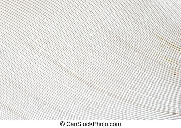 white bird feather background