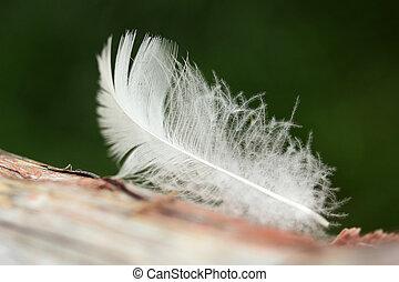 White bird feather