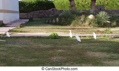 white bird in the garden
