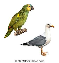white bird seagull Yellow Naped Amazon Parrot isolated on a white background