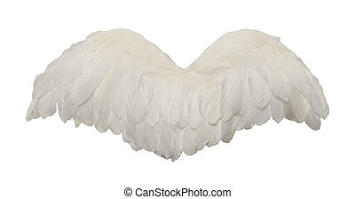 White Bird Wings