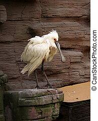 White bird with large beak