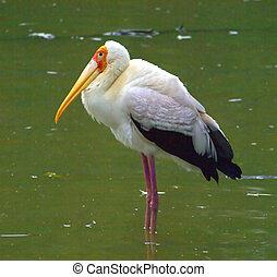 White bird with yellow beak