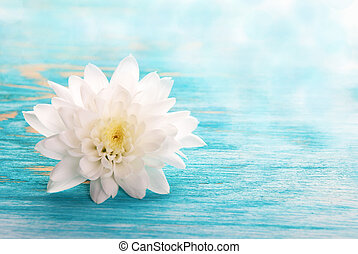 White Blossom on turquiose wooden Background with Copy space