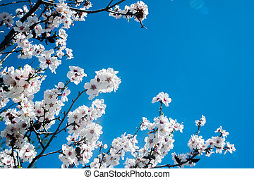 White blossoming tree against the blue sky