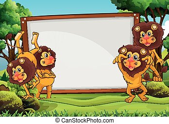 White board and lions in the forest