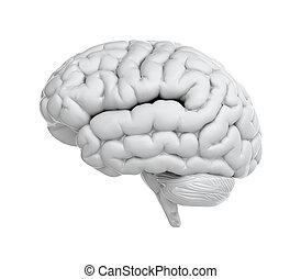 White brain - 3d render of brain on white background